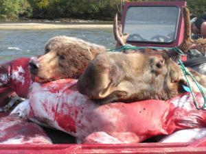 bear and moose sjx